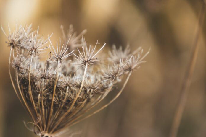 Common Weeds and How to Get Rid of Them