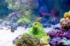 Best UV sterilizer aquariums