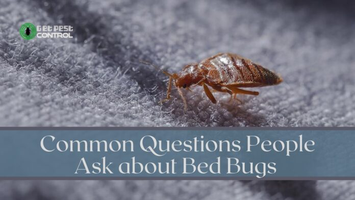 Common Questions about Bed Bugs