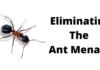 Eliminating The Ant Menace
