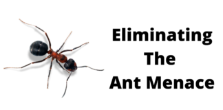 Eliminating The Ant Menace