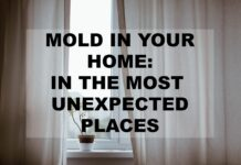 mold remediation services Maine