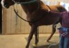 PEMF for horses