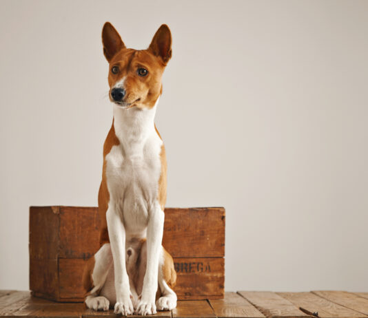 Canine Tips You Need To Know About