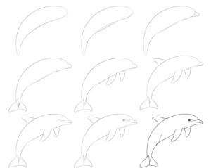 Dolphin drawing step by step