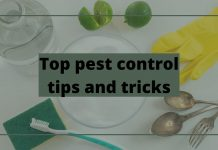 Top pest control tips and tricks